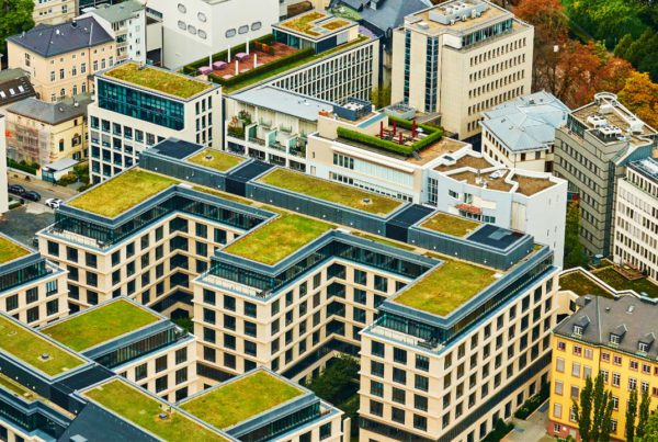 What Students in BIM Training Should Know About Green Roof Tech