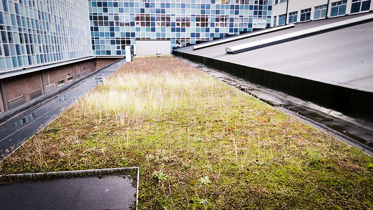 Green roofs can help to promote sustainability for building projects